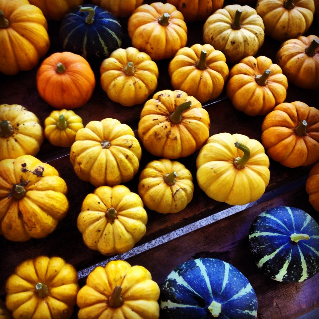 pumpkins and winter squash